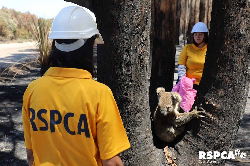 RSPCA workers saving the critters